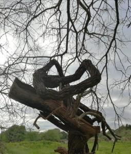 arbre x creix el silenci
